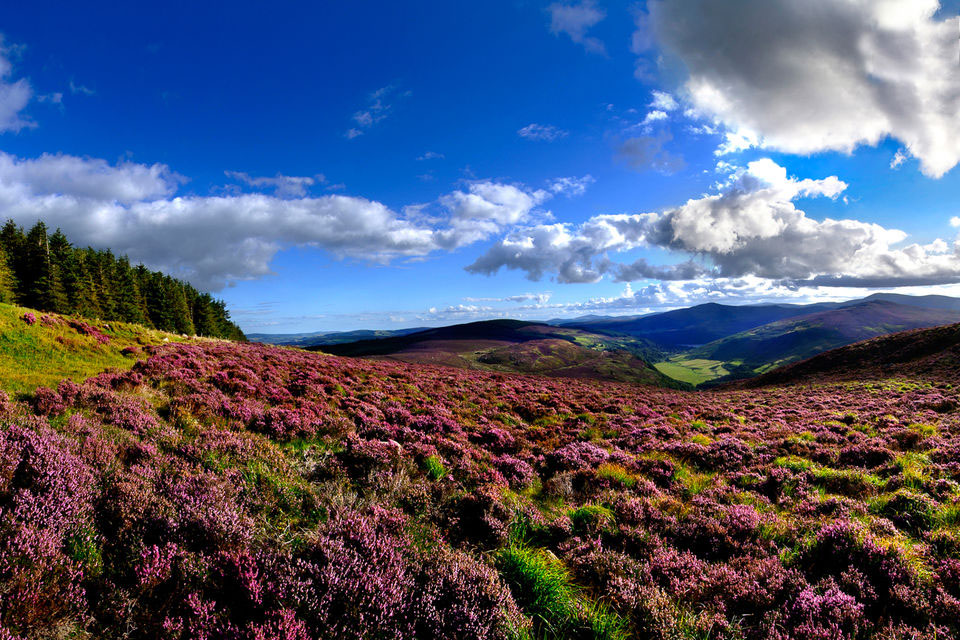 De Wicklow Mountains in Ierland